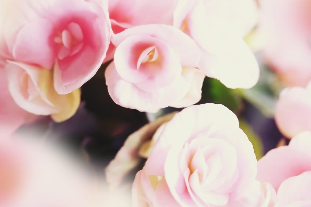 結婚式のブーケ外注 フローリスト咲(両親贈呈花束)