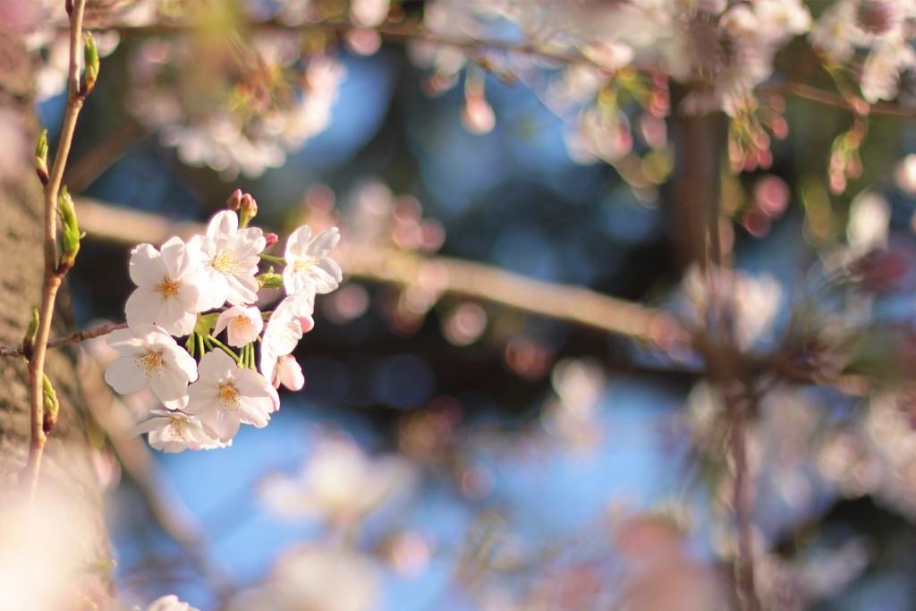 [2017年3月]ひよこ夫婦 ブログ運営月次活動報告[PV毎月公開!]