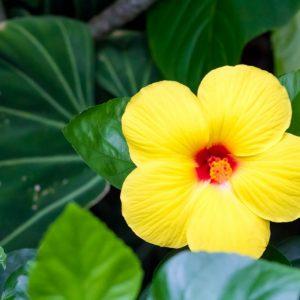 アウラニディズニー旅行準備:ハワイ旅行におすすめの時期は?アウラニの宿泊料金が安いのは年間でいつか、月&曜日ごとに比較!
