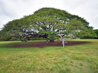 アウラニ旅行記2018*4〜オアフ島観光スタート「この木なんの木」のモアナルアガーデンは滞在時間20分で十分!?【子連れハワイ旅行ブログ】